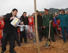 """Chủ tịch nước phát động """"Tết trồng cây đời đời nhớ ơn Bác Hồ"""""""