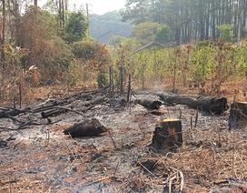 Chủ tịch tỉnh Đắk Nông trực tiếp chỉ đạo xử lý vụ phá rừng dân biết, chính quyền không!