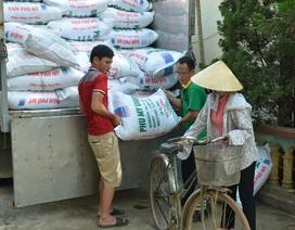 Quản lý dinh dưỡng cho cây lúa bằng phần mềm tiên tiến RCM