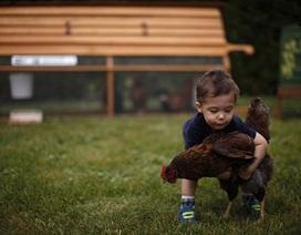 Canada: Dịch vụ cho thuê... gà đẻ trứng