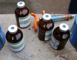 Xử phạt người tiêm thuốc 'có nguy cơ gây ung thư tủy' vào heo