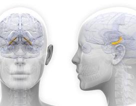 Não bộ của phụ nữ tăng trưởng một ít trong kỳ kinh nguyệt