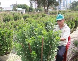 Quảng Trị: Mưa lũ, sâu bệnh khiến người trồng hoa Tết thất thu