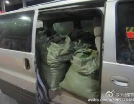 Cặp vợ chồng hái trộm 2.500 bông hoa ở Disneyland Thượng Hải