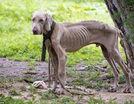 Venezuela - Khủng hoảng kinh tế chó chết đói đầy đường