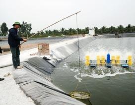 Uông Bí: Dành nguồn lực đầu tư cho nông nghiệp