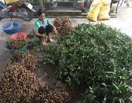 Nhịp cầu bạn đọc số 27: Mất đất, nhiều hộ dân trồng nhãn tại Hưng Yên lo mất nghề
