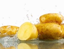 Những điều có thể bạn chưa biết về khoai tây