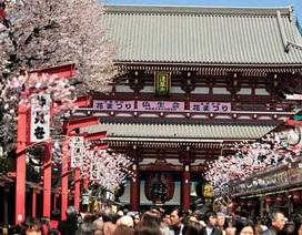Lễ hội Hoa Anh Đào Hanami: Điểm đến của những ai yêu văn hóa dịp Tết