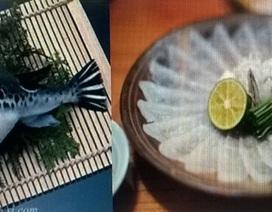 Cá nóc: Vì sao có độc nhưng vẫn được ưa chuộng?