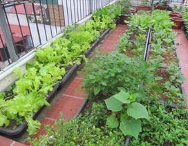 Ảnh dự thi số 11: Vườn rau xanh mướt trên sân thượng
