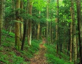 Giảm stress hiệu quả bằng cách...ngắm cây xanh