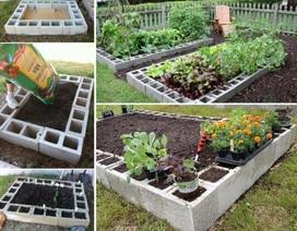 Mách bạn giải pháp trồng rau tại gia không cần thùng xốp