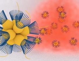 Sinh vật đơn bào di chuyển về phía môi trường có oxy như thế nào?