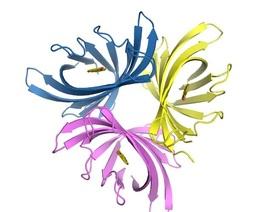 Protein phá vỡ màng sinh học truyền nhiễm