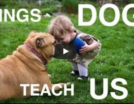 """Ngộ nghĩnh những điều """"bạn bốn chân"""" có thể dạy chúng ta"""