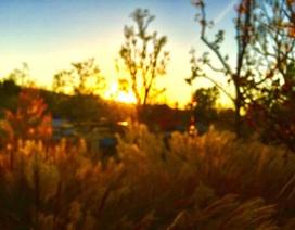 Ngắm ảnh chụp tuyệt đẹp từ iPhone của bé 13 tuổi