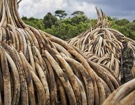 """Choáng với """"núi ngà voi"""" trị giá 172 triệu USD bị Kenya tiêu hủy"""