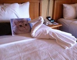 Đẳng cấp dịch vụ khách sạn: Yêu cầu kỳ quặc mấy cũng...chiều