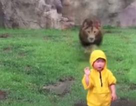 Thót tim khoảnh khắc sư tử định vồ em bé
