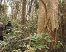 Mẹ đẻ sát hại 3 con rồi đốt nhà bỏ trốn vào rừng