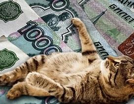 Mèo nhận lương 400 nghìn rúp/năm