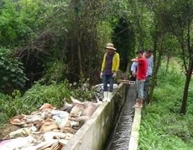 Phát hiện Công ty Đài Loan vứt hàng trăm xác heo ra sông Sài Gòn
