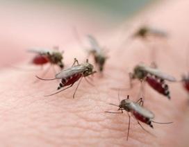 Gia Lai: Bệnh sốt xuất huyết tăng chóng mặt