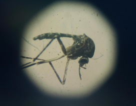 Virus Zika có thể gây ra những ảnh hưởng tới người trưởng thành?