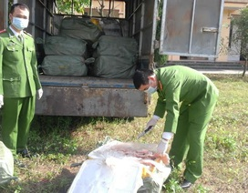 Bắt giữ 900kg nầm lợn nhập lậu từ Trung Quốc hôi thối mốc xanh