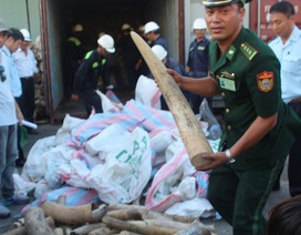 Sẽ nghiền nát hơn 2 tấn ngà voi và 70 kg sừng tê giác vào ngày 12/11