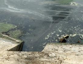 Hà Nội: Tảo phát triển mạnh gây ô nhiễm hồ Ngọc Khánh