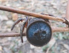 Nông dân Trung Quốc phát hiện ra con nhện cực kỳ quý hiếm