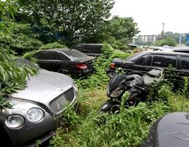 Bên trong khu vườn hàng trăm siêu xe hạng sang bị bỏ xó ở Trung Quốc