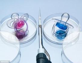 Anh: Cho phép biến đổi gen phôi thai người
