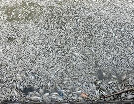Hà Nội: Điều tra dịch tễ tìm nguyên nhân cá chết