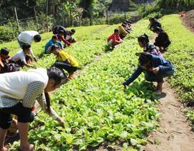 Thầy cô giáo vùng biên trồng rau, nuôi lợn giữ chân học trò
