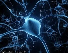 Điều chỉnh hoạt động não để giảm… stress