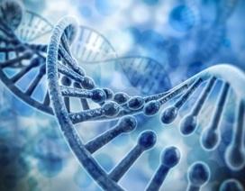 Những dấu vết của một cơn đau tim được lưu trữ trong gen