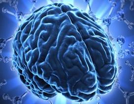 Chỉ số khối cơ thể cao không tốt cho não