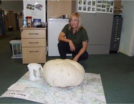 Nấm khổng lồ nặng 10kg
