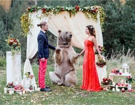 """Gấu """"cử hành"""" hôn lễ cho đôi trẻ"""