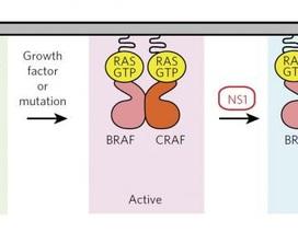Phát hiện cách ức chế gen gây ung thư
