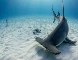 Bị phạt tù vì đấm cá mập đầu búa