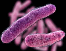 """Khai thác năng lượng của vi khuẩn ăn thịt như một """"loại kháng sinh sống"""""""
