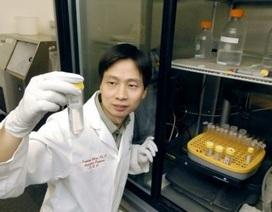 Hạt nano có thể được sử dụng để khắc phục bệnh ung thư vú kháng trị