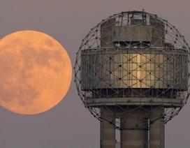 """Chiêm ngưỡng những hình ảnh """"siêu trăng thế kỷ"""" trên khắp thế giới"""