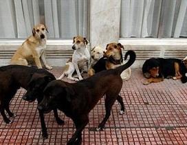 Đau lòng bà mẹ bị hơn 100 con chó hoang tấn công