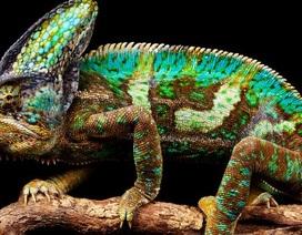 """""""Truy tìm"""" con vật đa sắc màu nhất thế giới"""