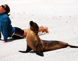 """Chết cười với bộ ảnh """"Khi thú cưng cũng tập yoga"""""""